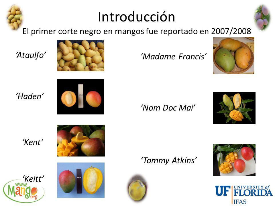 Introducción El primer corte negro en mangos fue reportado en 2007/2008