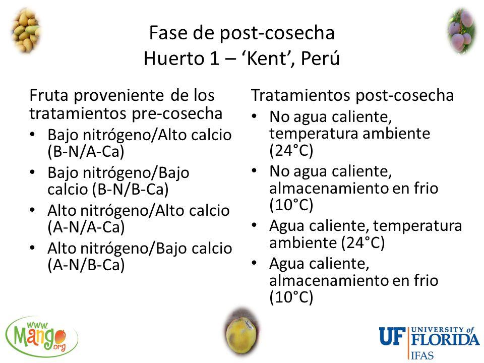 Fase de post-cosecha Huerto 1 – 'Kent', Perú