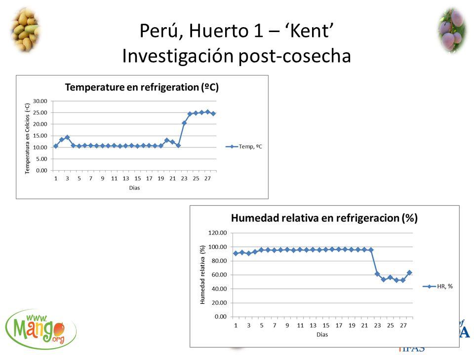 Perú, Huerto 1 – 'Kent' Investigación post-cosecha
