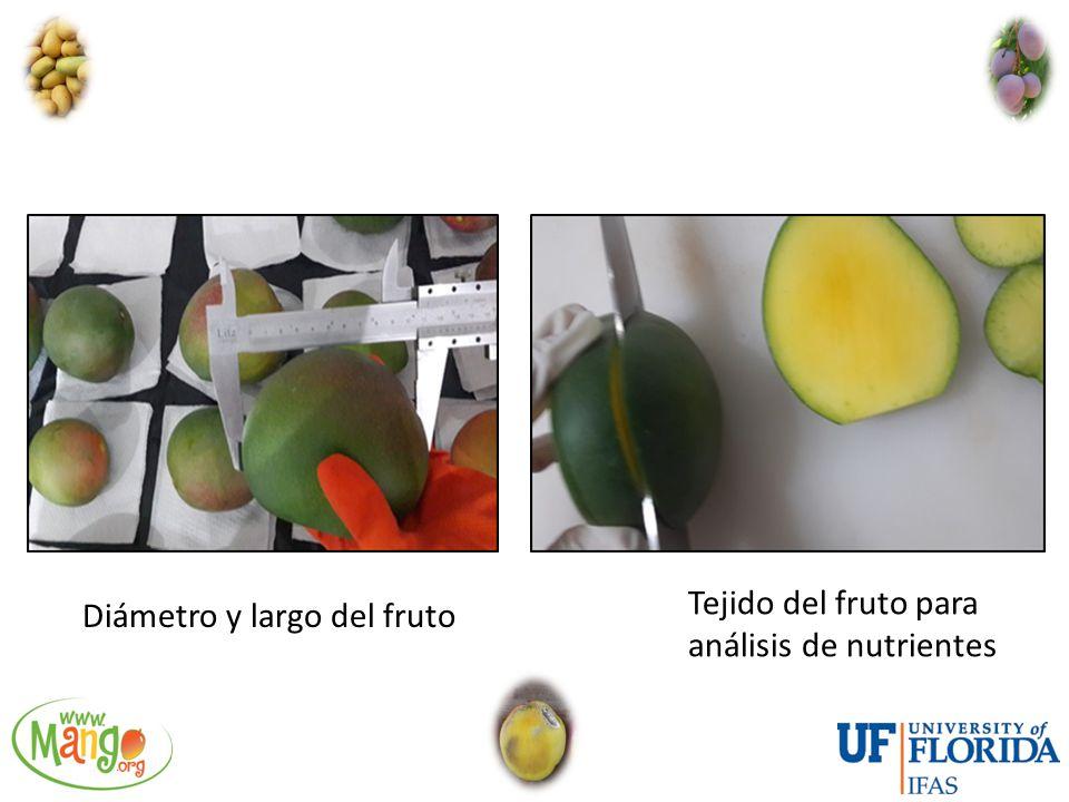 Tejido del fruto para análisis de nutrientes Diámetro y largo del fruto
