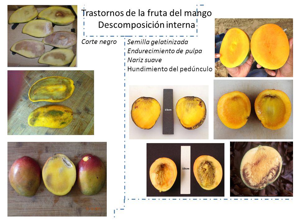 Trastornos de la fruta del mango Descomposición interna
