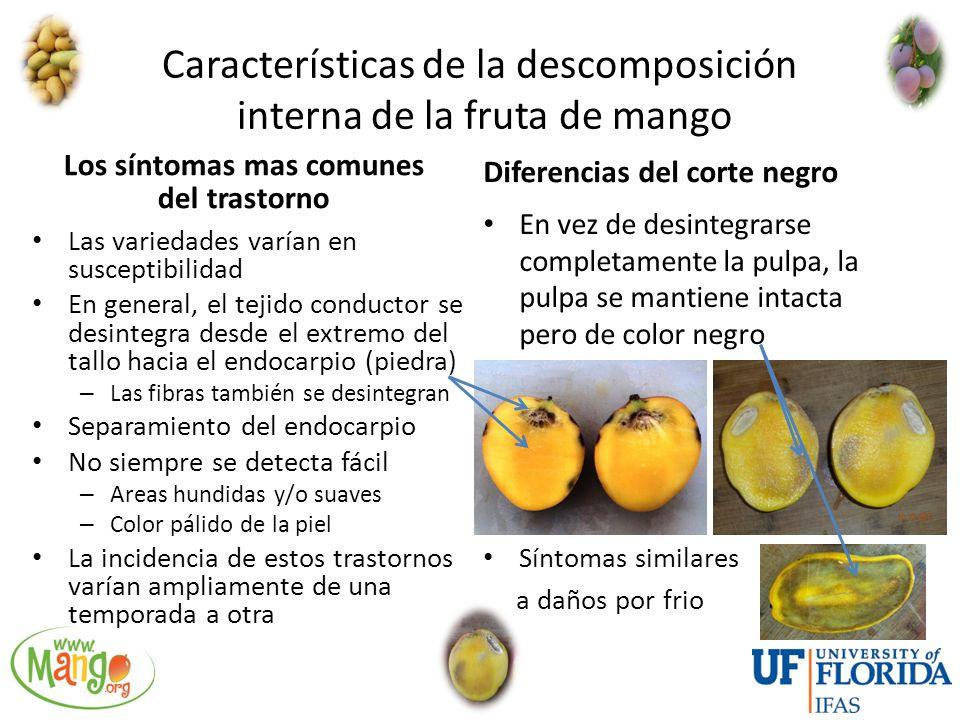 Características de la descomposición interna de la fruta de mango