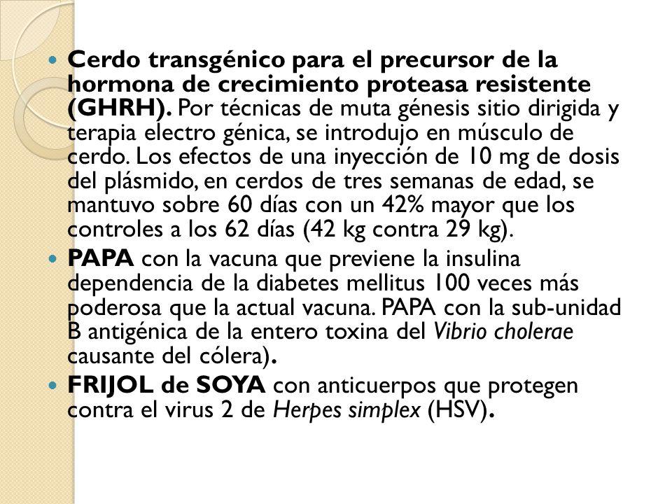 Cerdo transgénico para el precursor de la hormona de crecimiento proteasa resistente (GHRH). Por técnicas de muta génesis sitio dirigida y terapia electro génica, se introdujo en músculo de cerdo. Los efectos de una inyección de 10 mg de dosis del plásmido, en cerdos de tres semanas de edad, se mantuvo sobre 60 días con un 42% mayor que los controles a los 62 días (42 kg contra 29 kg).