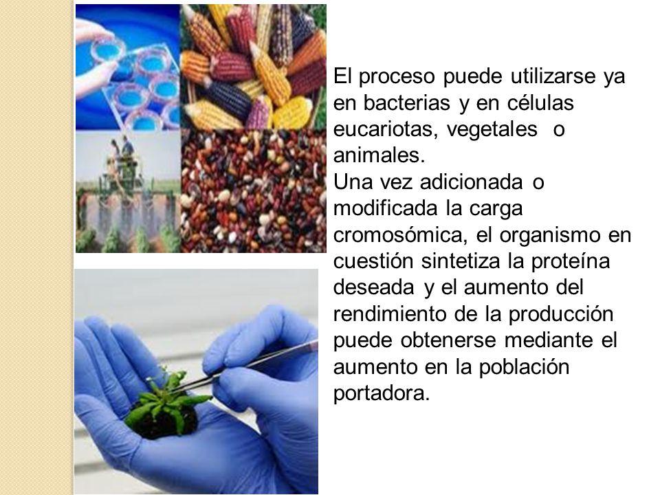 El proceso puede utilizarse ya en bacterias y en células eucariotas, vegetales o animales.