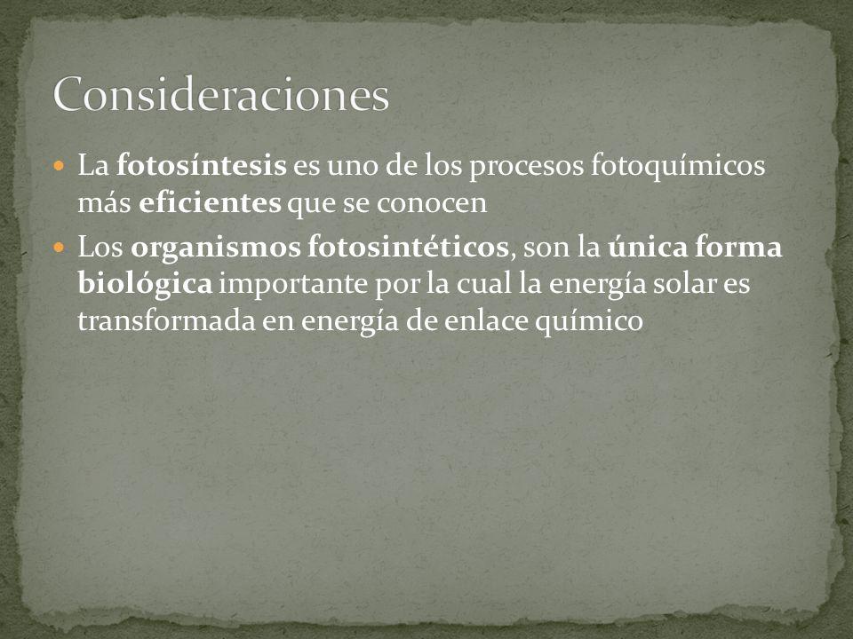 Consideraciones La fotosíntesis es uno de los procesos fotoquímicos más eficientes que se conocen.