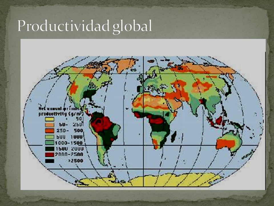 Productividad global