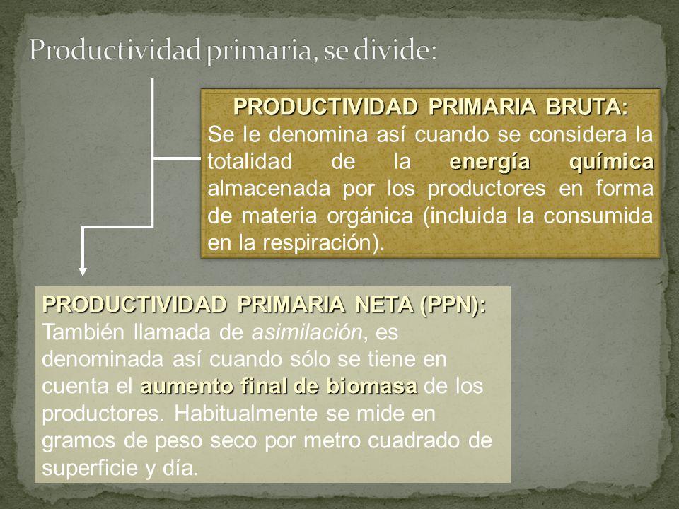 Productividad primaria, se divide: