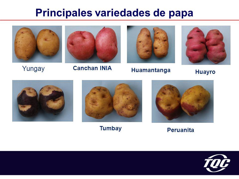 Principales variedades de papa