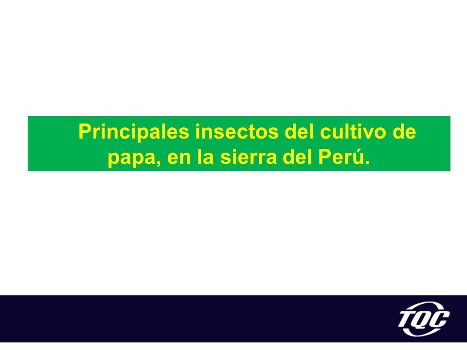 Principales insectos del cultivo de papa, en la sierra del Perú.