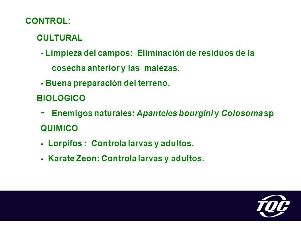 CONTROL: CULTURAL. - Limpieza del campos: Eliminación de residuos de la cosecha anterior y las malezas.