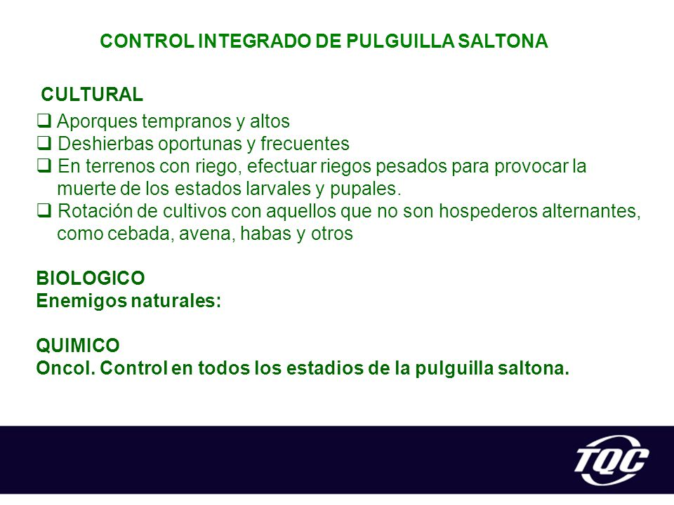 CONTROL INTEGRADO DE PULGUILLA SALTONA