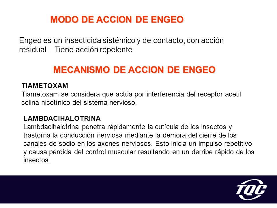 MECANISMO DE ACCION DE ENGEO