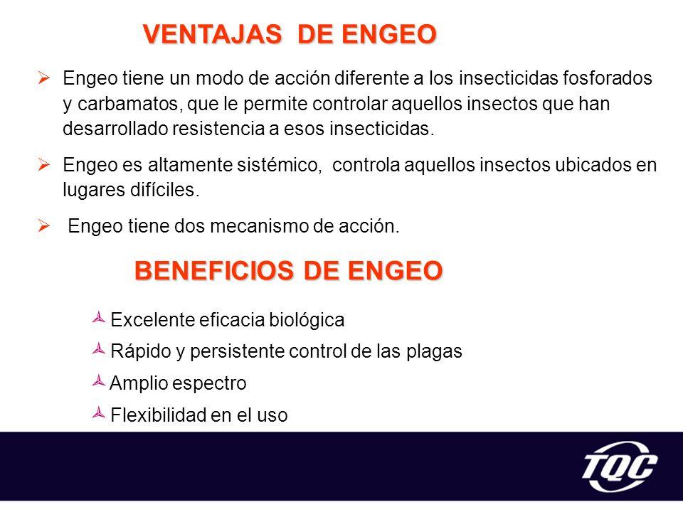 VENTAJAS DE ENGEO BENEFICIOS DE ENGEO