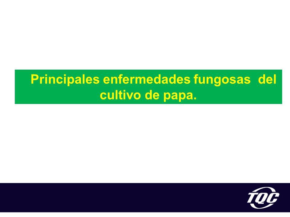 Principales enfermedades fungosas del cultivo de papa.