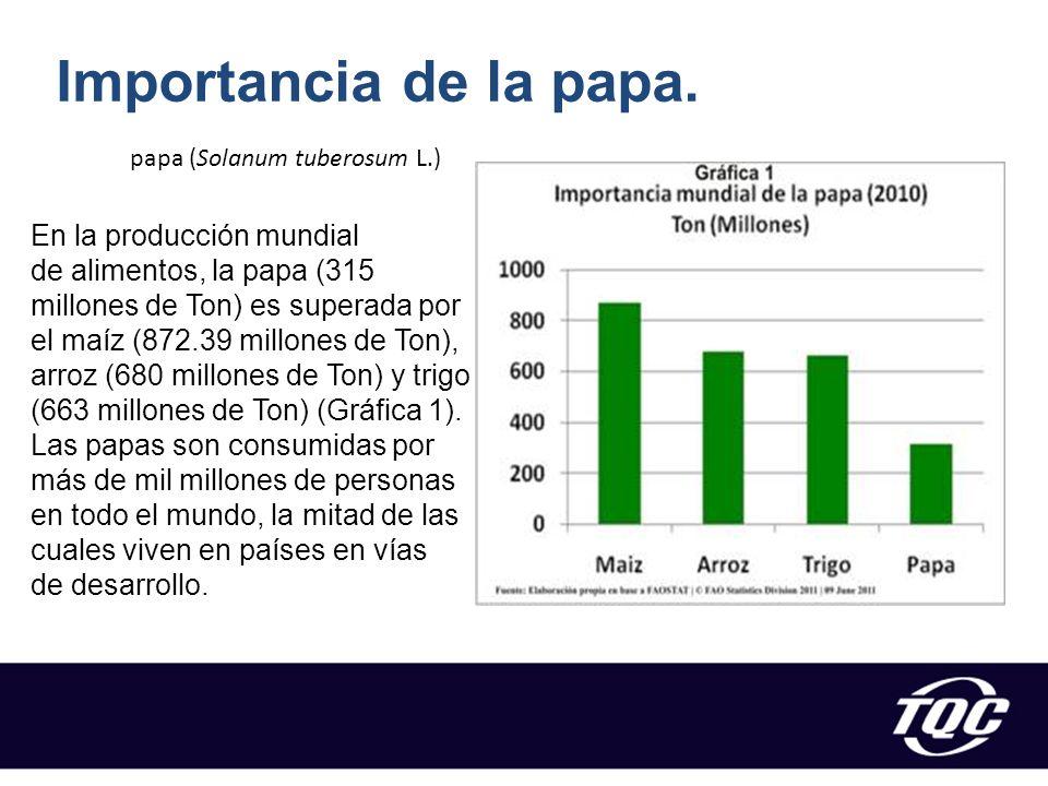 Importancia de la papa. papa (Solanum tuberosum L.)