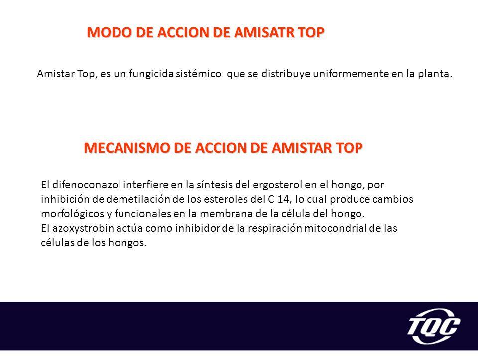MODO DE ACCION DE AMISATR TOP MECANISMO DE ACCION DE AMISTAR TOP