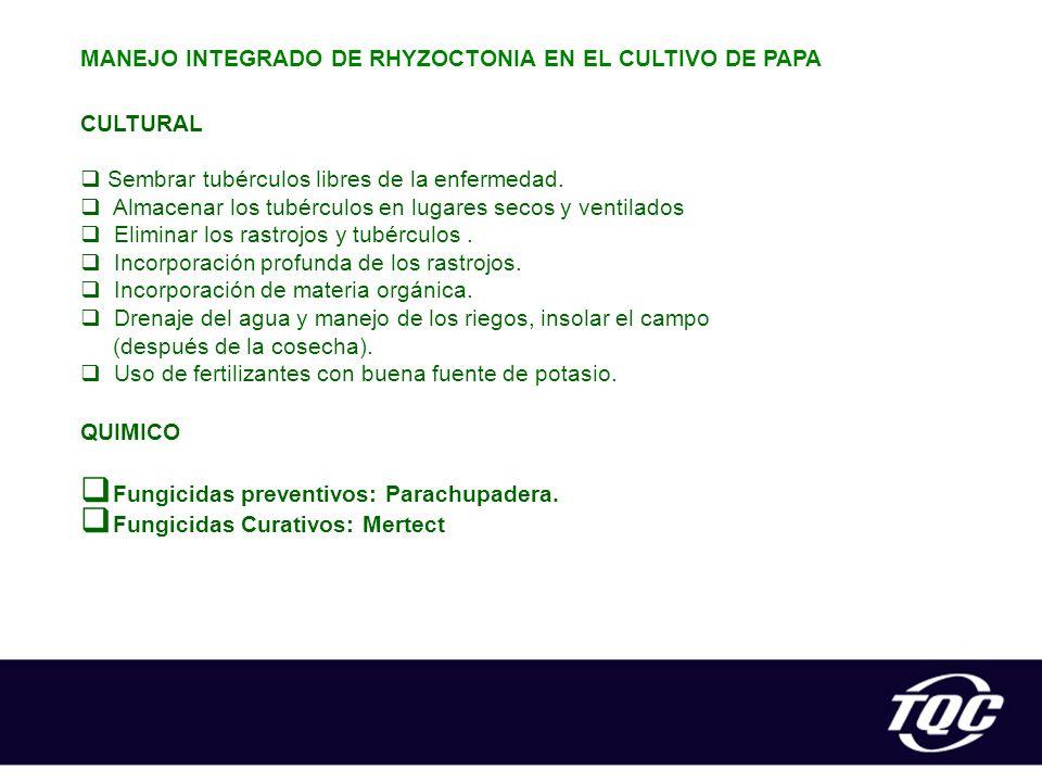 MANEJO INTEGRADO DE RHYZOCTONIA EN EL CULTIVO DE PAPA