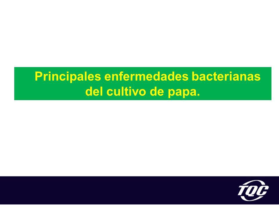 Principales enfermedades bacterianas del cultivo de papa.