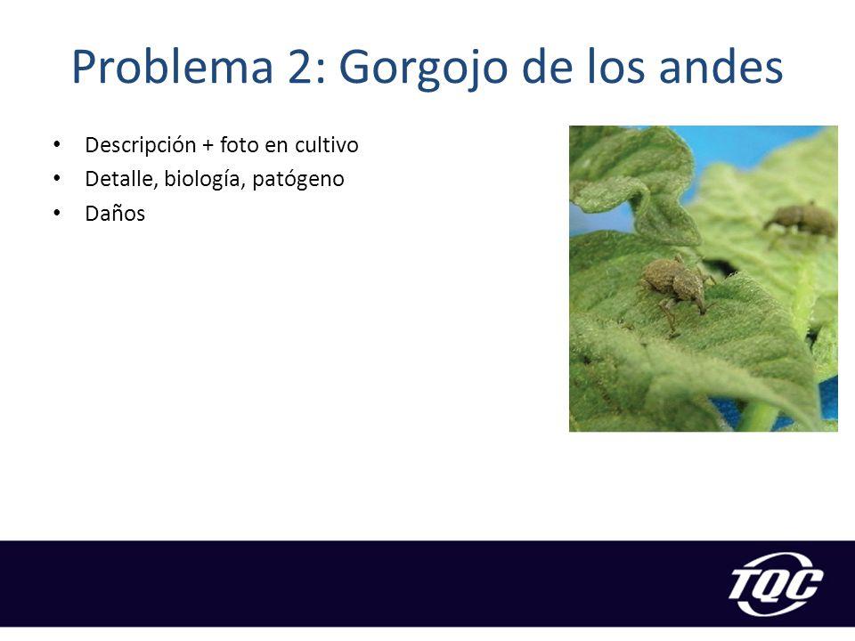 Problema 2: Gorgojo de los andes