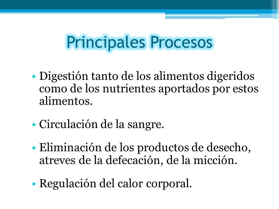 Principales Procesos Digestión tanto de los alimentos digeridos como de los nutrientes aportados por estos alimentos.