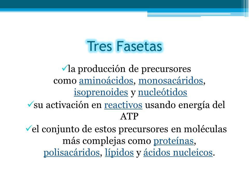 su activación en reactivos usando energía del ATP
