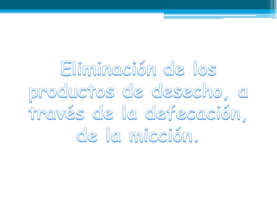 Eliminación de los productos de desecho, a través de la defecación, de la micción.