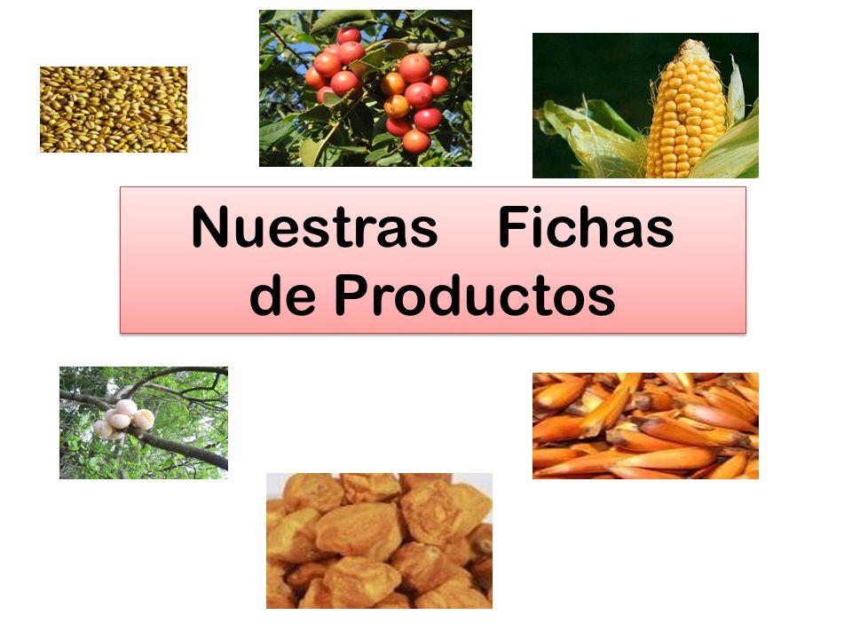 Nuestras Fichas de Productos