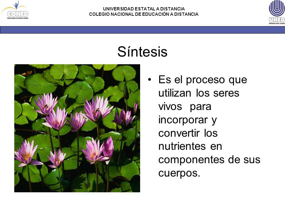 Síntesis Es el proceso que utilizan los seres vivos para incorporar y convertir los nutrientes en componentes de sus cuerpos.