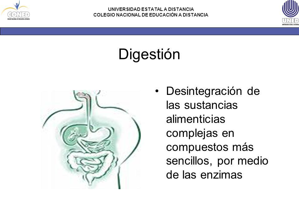Digestión Desintegración de las sustancias alimenticias complejas en compuestos más sencillos, por medio de las enzimas.