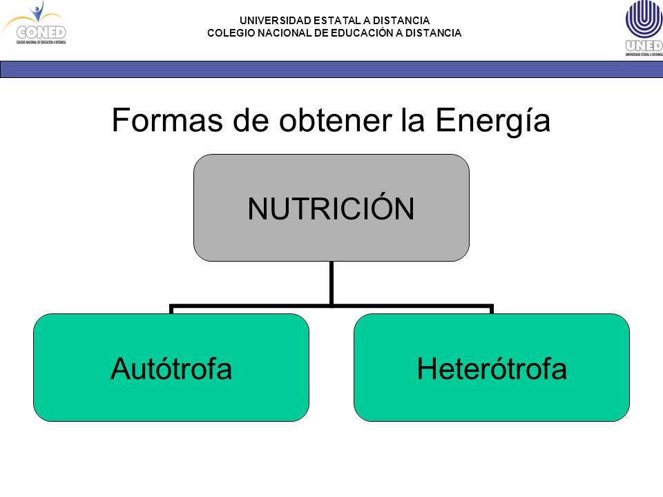 Formas de obtener la Energía