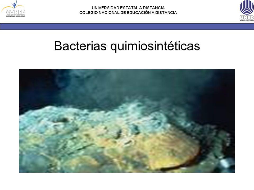 Bacterias quimiosintéticas