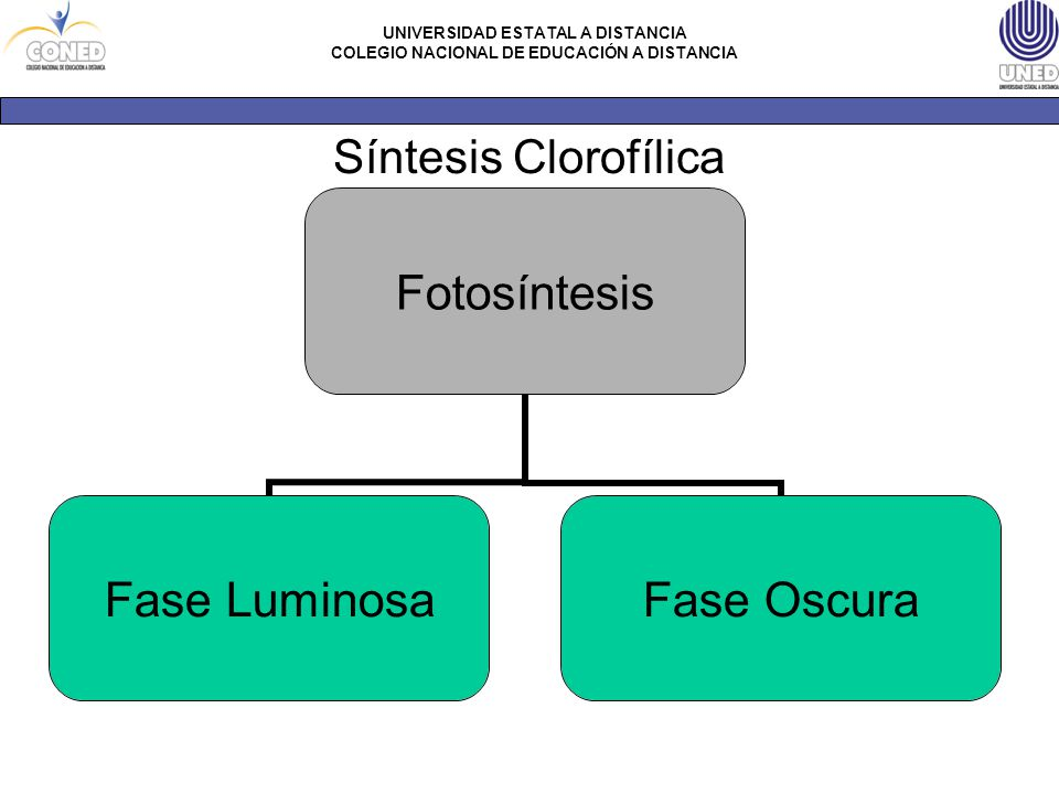 Síntesis Clorofílica