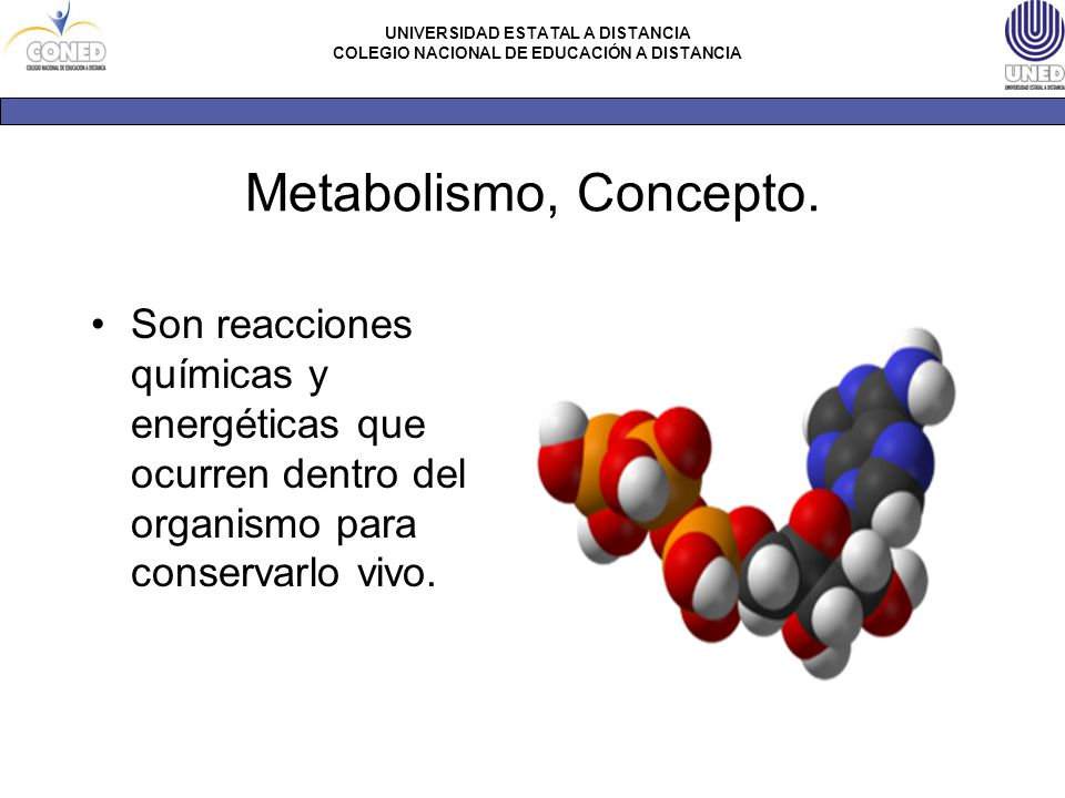 Metabolismo, Concepto.