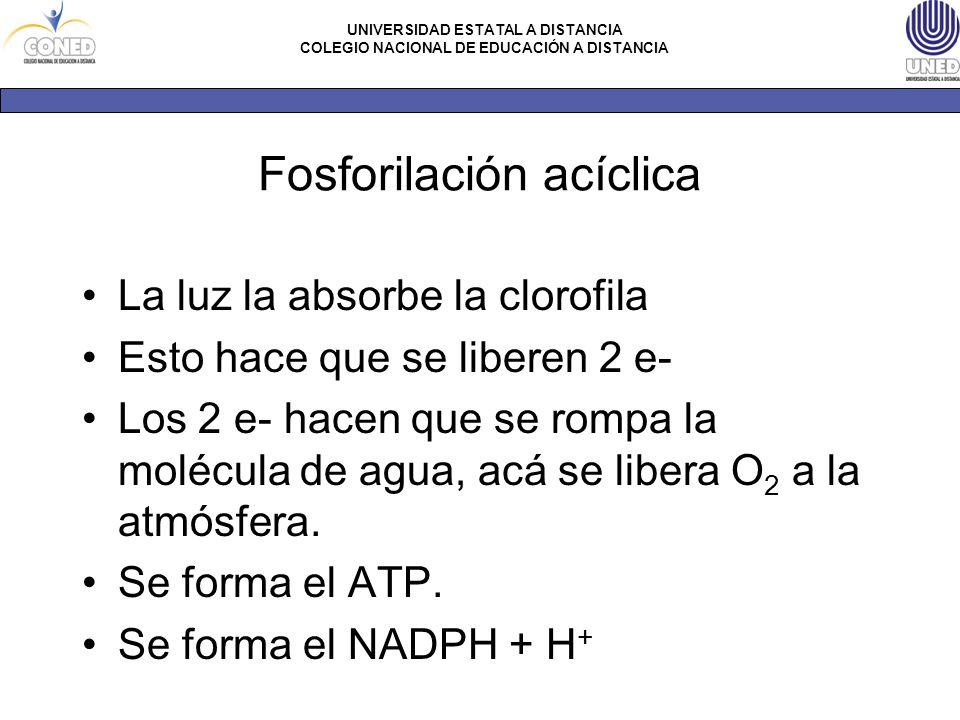 Fosforilación acíclica