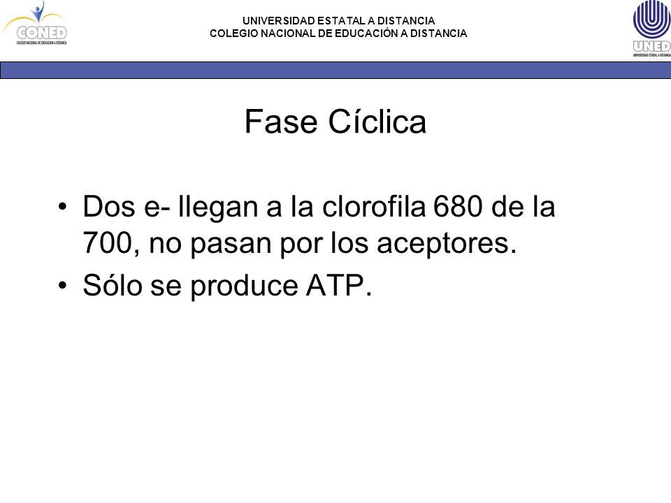 Fase Cíclica Dos e- llegan a la clorofila 680 de la 700, no pasan por los aceptores.