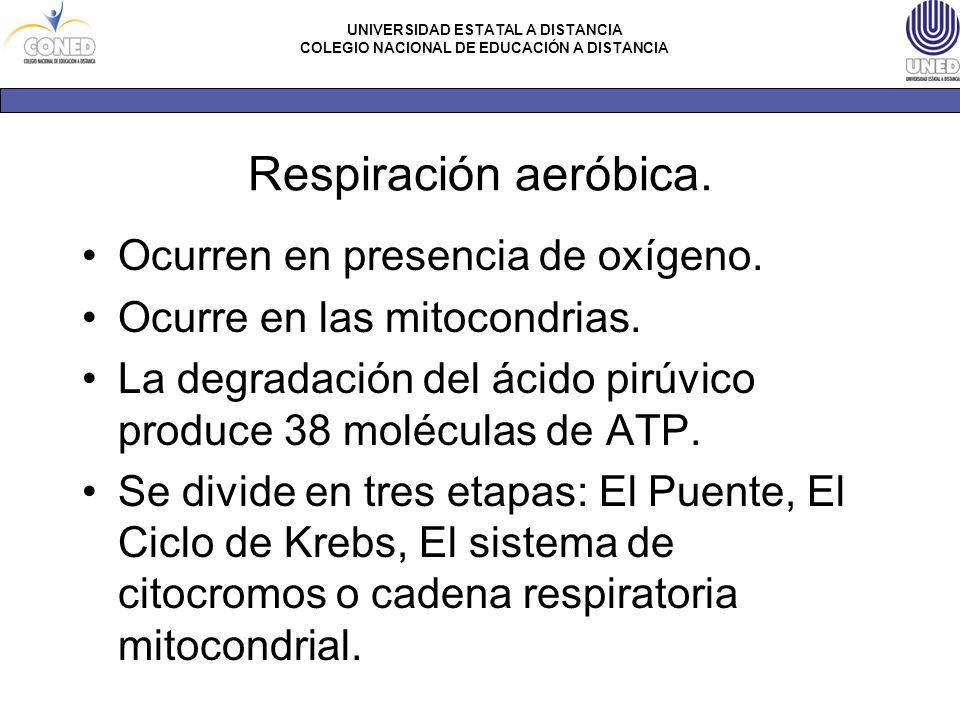 Respiración aeróbica. Ocurren en presencia de oxígeno.