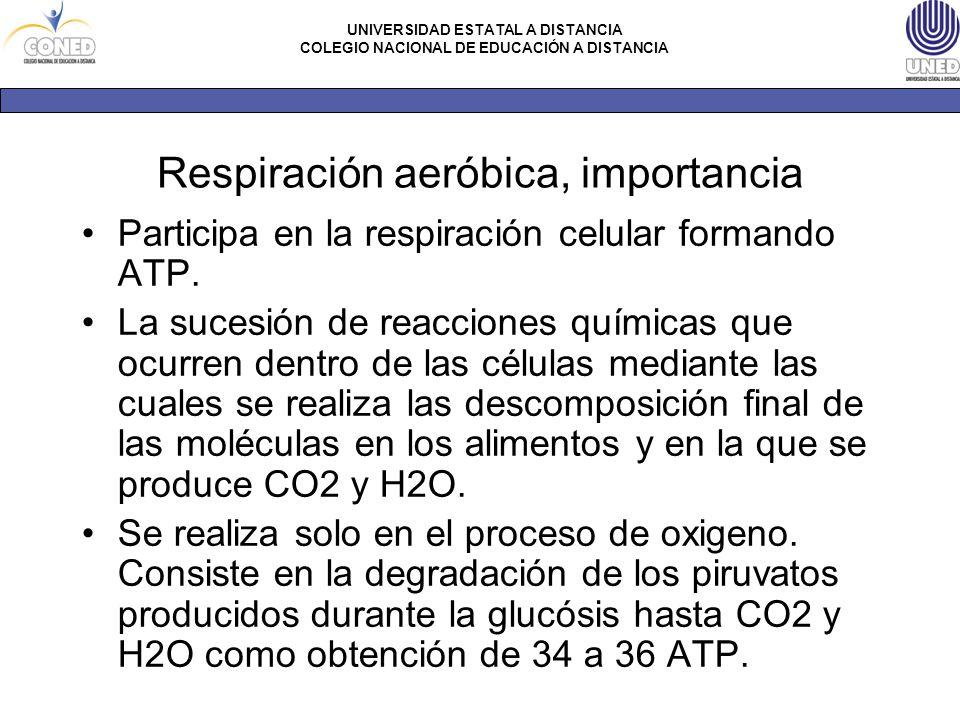 Respiración aeróbica, importancia