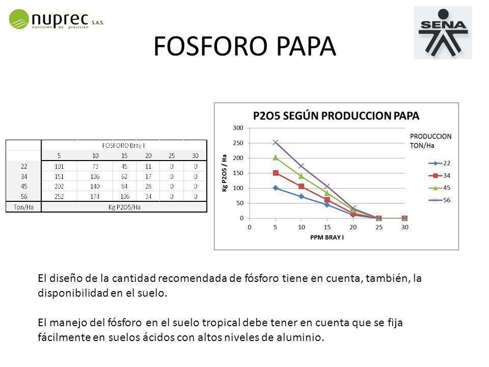 FOSFORO PAPA El diseño de la cantidad recomendada de fósforo tiene en cuenta, también, la disponibilidad en el suelo.