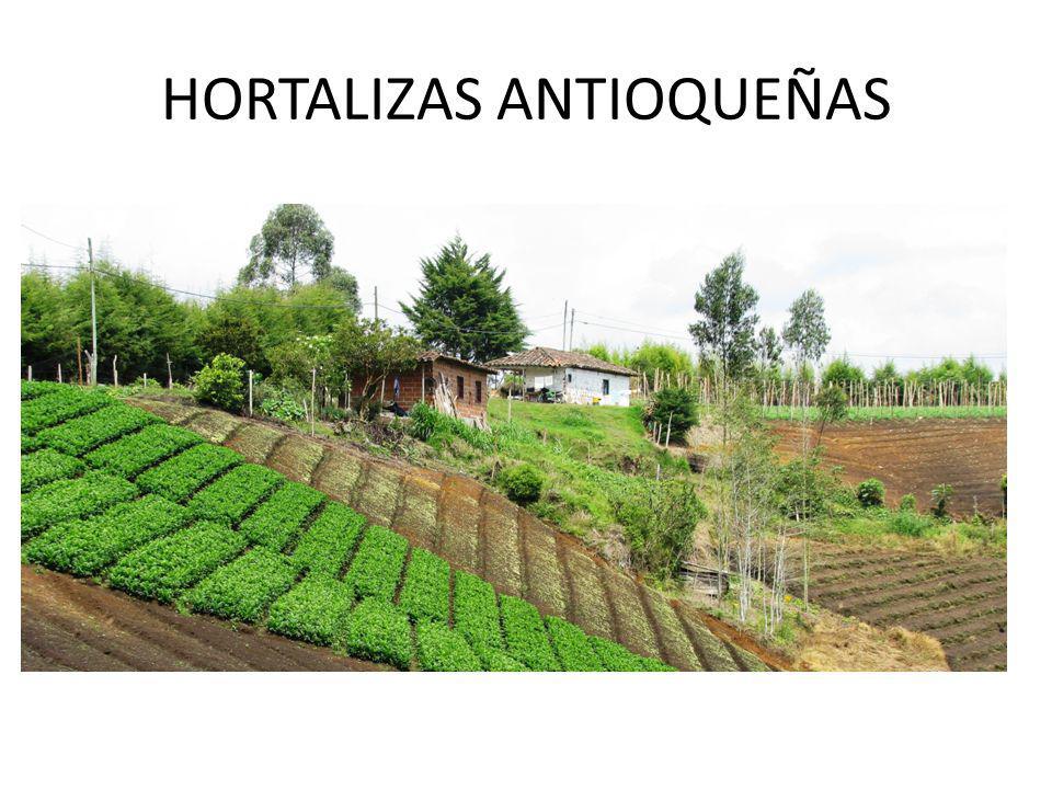 HORTALIZAS ANTIOQUEÑAS
