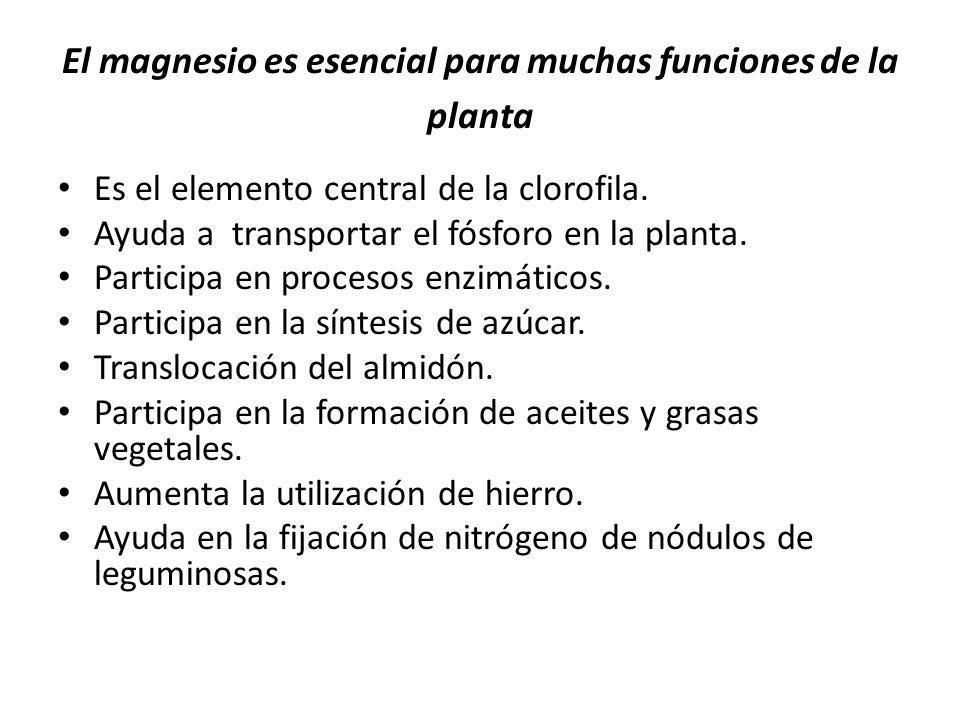 El magnesio es esencial para muchas funciones de la planta