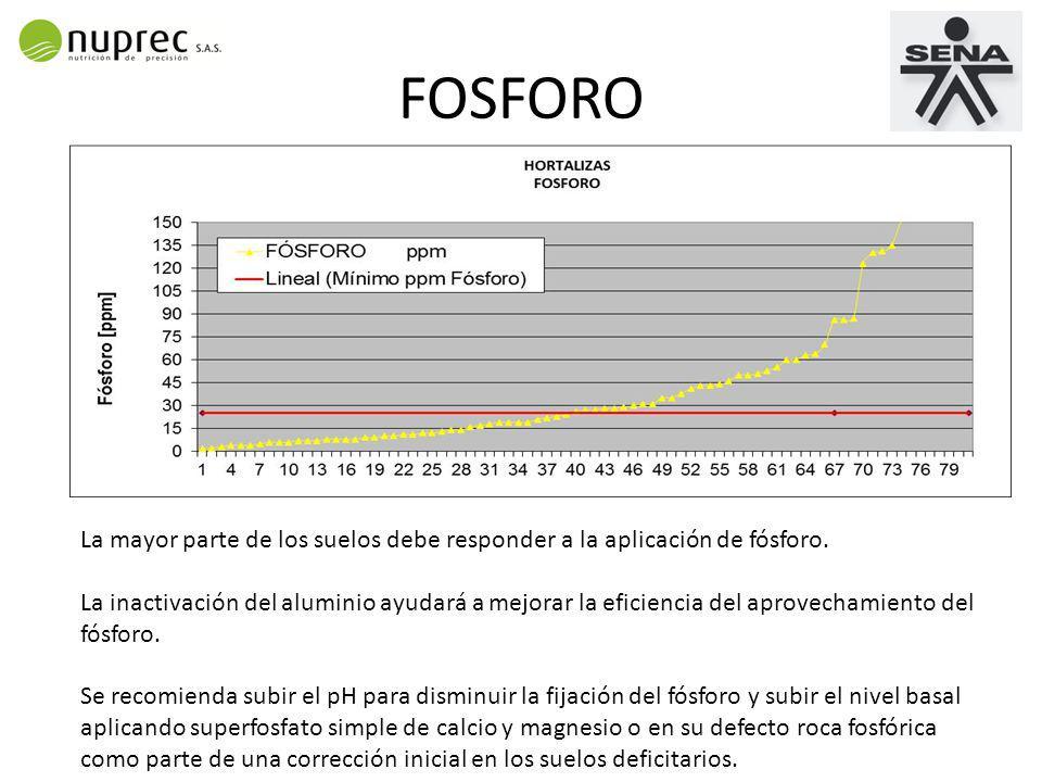 FOSFORO La mayor parte de los suelos debe responder a la aplicación de fósforo.