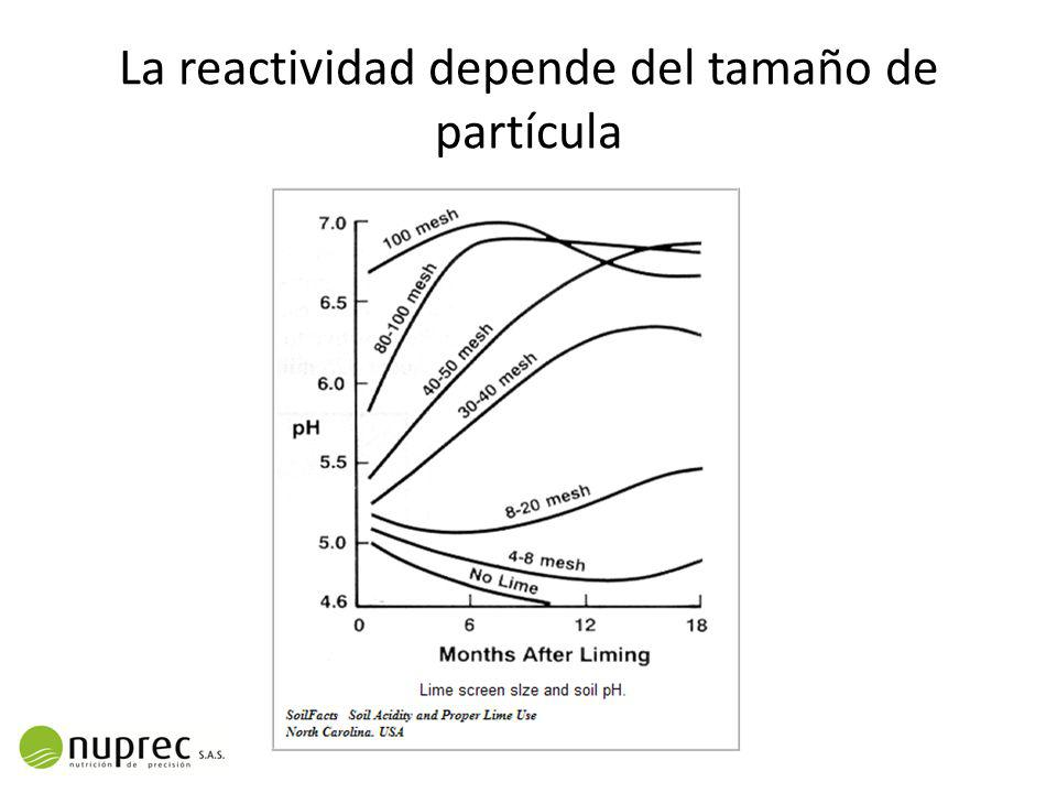 La reactividad depende del tamaño de partícula