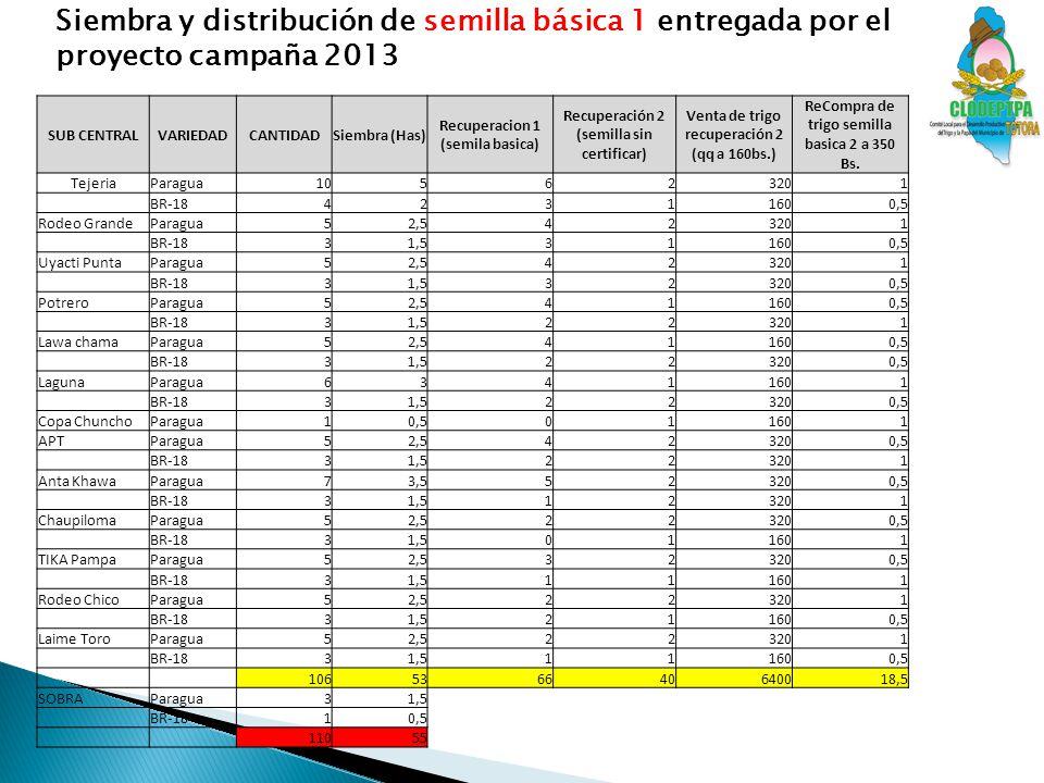 Siembra y distribución de semilla básica 1 entregada por el proyecto campaña 2013