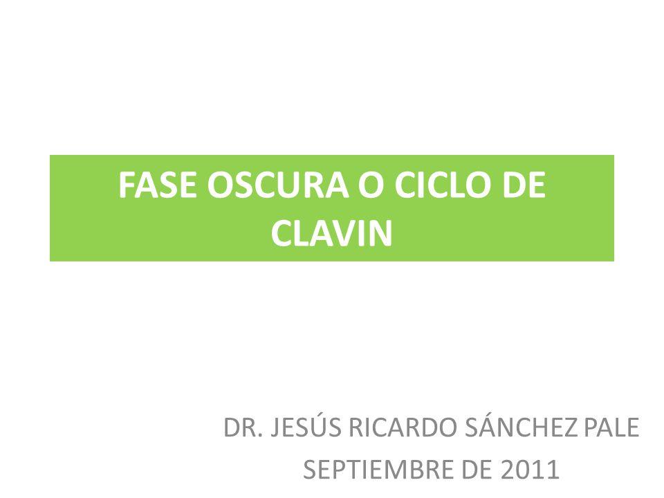 FASE OSCURA O CICLO DE CLAVIN