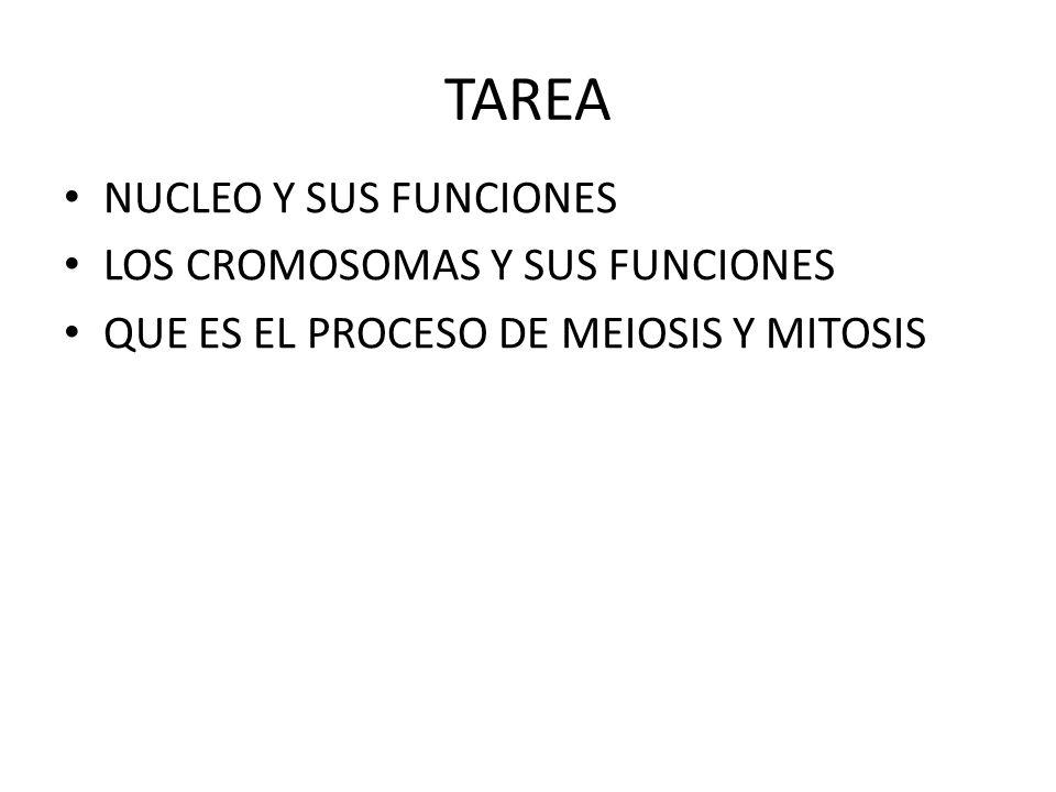 TAREA NUCLEO Y SUS FUNCIONES LOS CROMOSOMAS Y SUS FUNCIONES