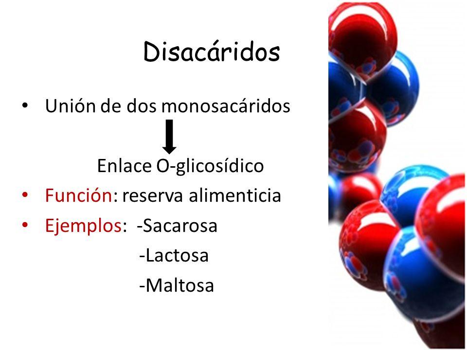 Disacáridos Unión de dos monosacáridos Enlace O-glicosídico