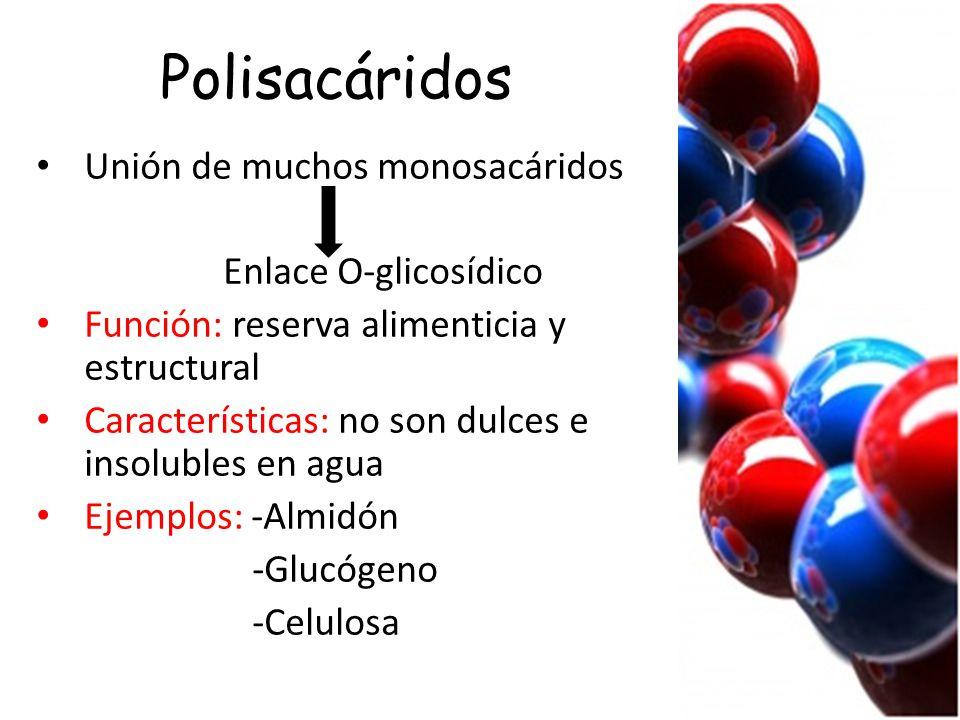 Polisacáridos Unión de muchos monosacáridos Enlace O-glicosídico