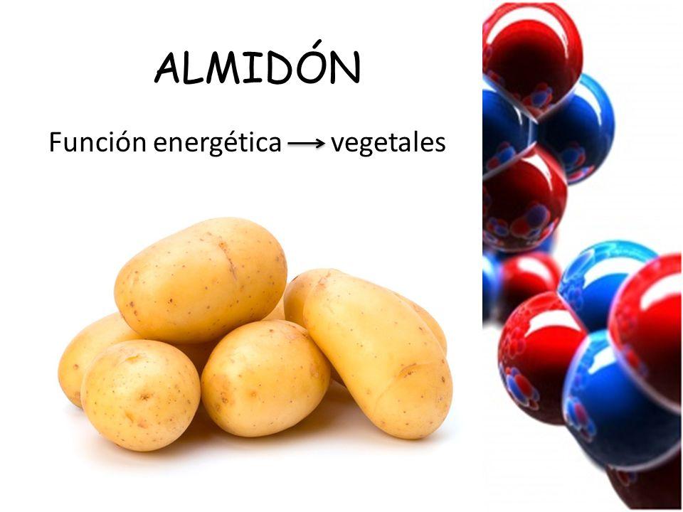 ALMIDÓN Función energética vegetales
