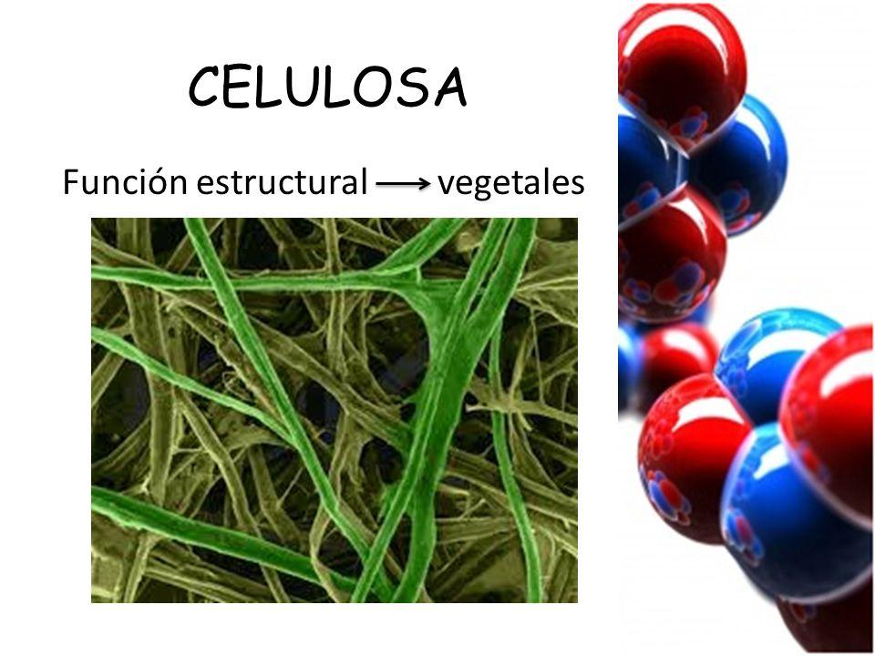 CELULOSA Función estructural vegetales