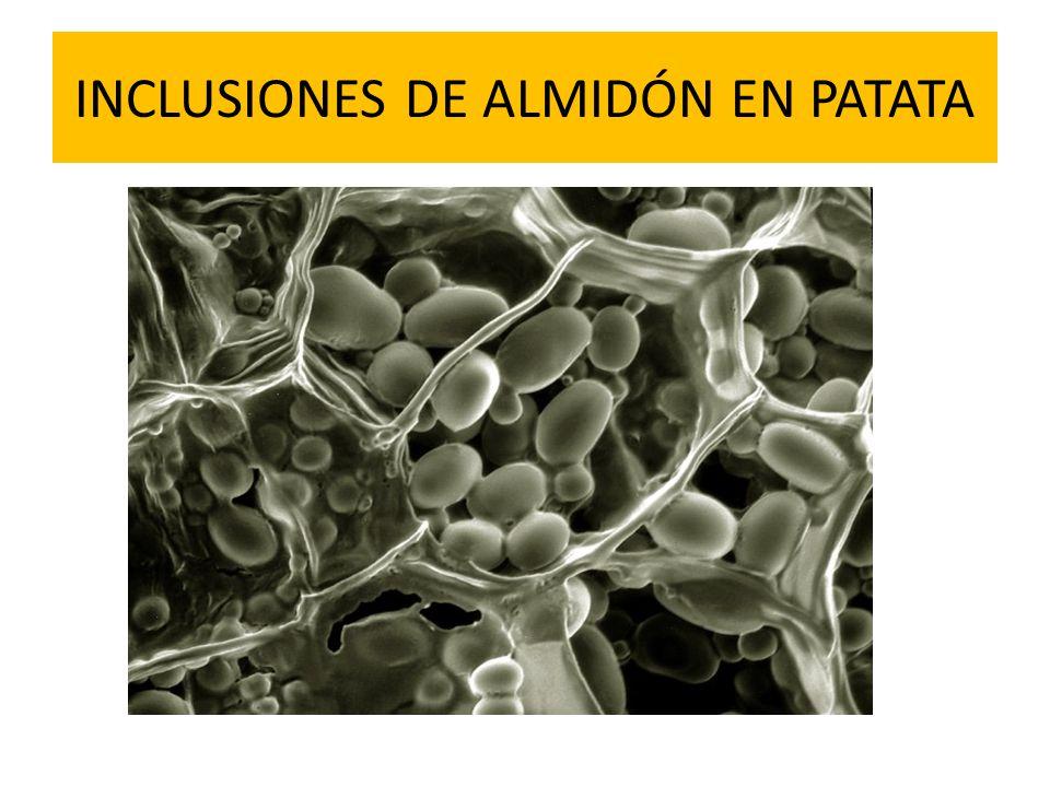 INCLUSIONES DE ALMIDÓN EN PATATA
